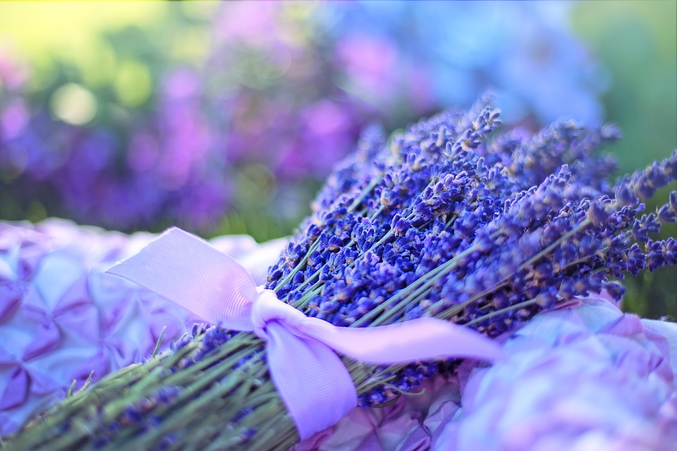 lavender-2482374_960_720.jpg