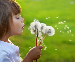 dandelion-wishes-home-page
