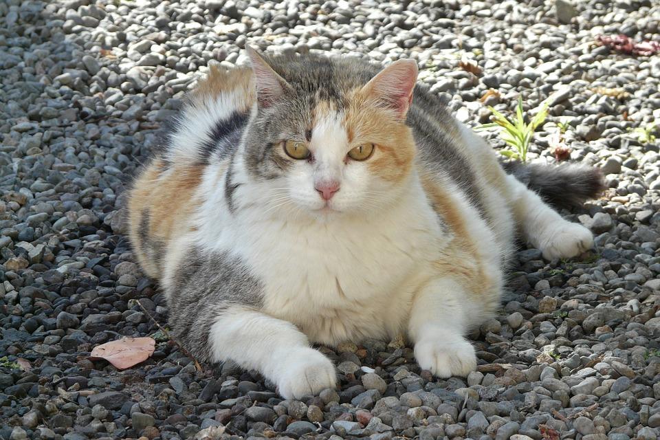 lucky-cat-1196761_960_720.jpg