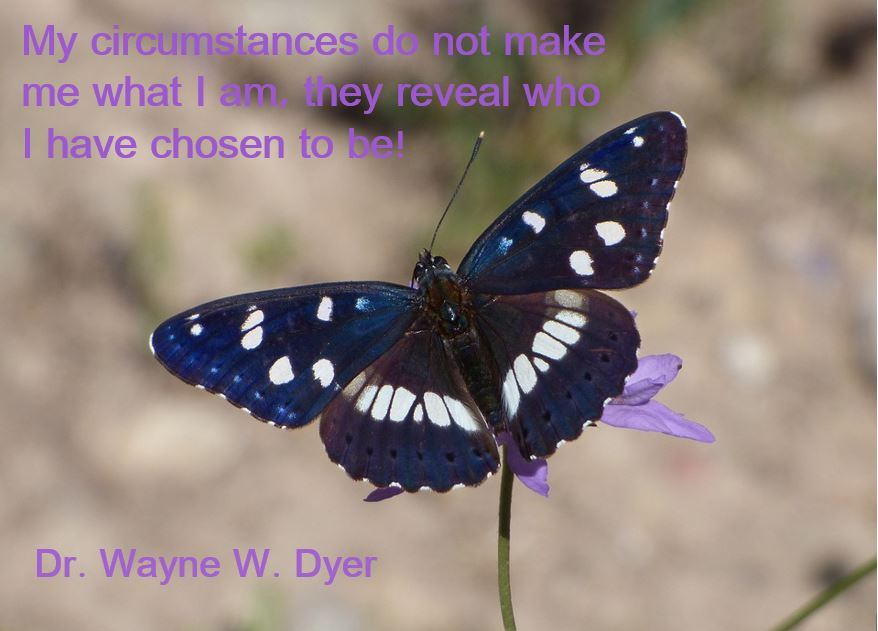 Dr. Dyer Quote.JPG