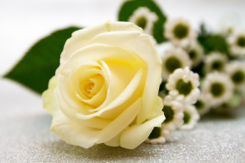 rose-3159554_960_720.jpg